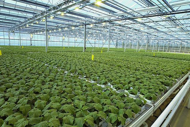 Ученые ЮУрГАУ начинают разработку технологий экологизированной защиты растений